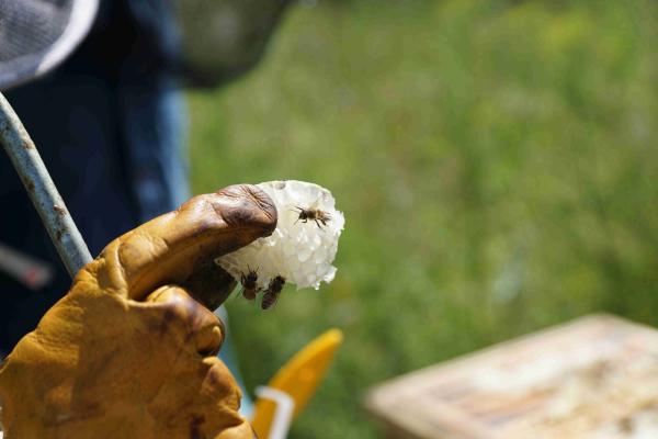 Bienenwaben Nahaufnahme