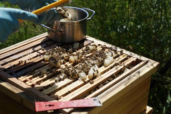 Einblick in den Campus Bienenkasten