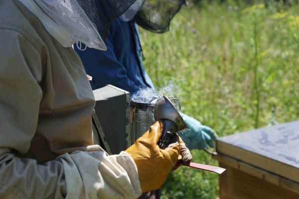 Gerät zur Raucherzeugung (auch Smoker genannt) zur Beruhigung der Bienen