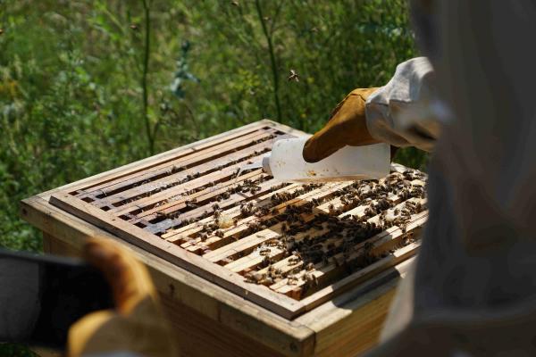 Mittel zur Vorbeugung/Bekämpfung von schädlichen Varroa Milben