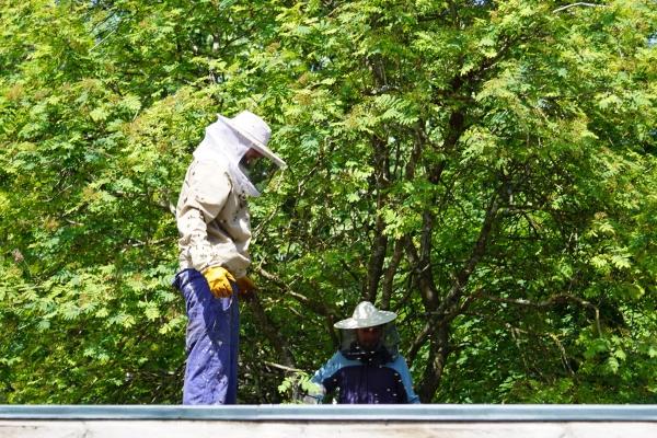 Rettung des Bienenvolks in Aktion