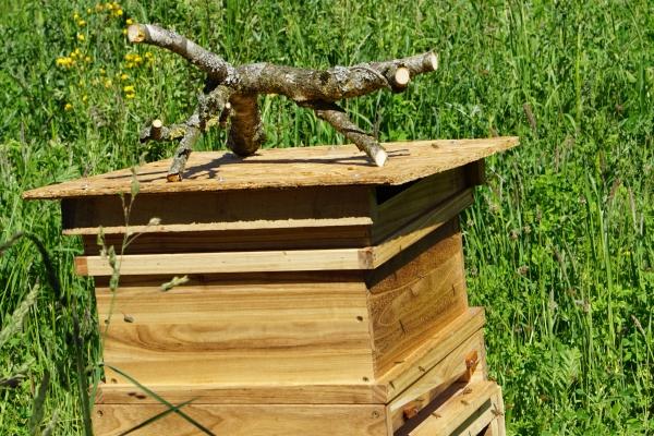 Der Campus Bienenkasten (auch Beute genannt) mit dem geretteten Bienenvolk